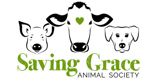 G-Force Signs and Graphics - Signs & Graphics - Saving Grace Animal Society - Red Deer, Alberta